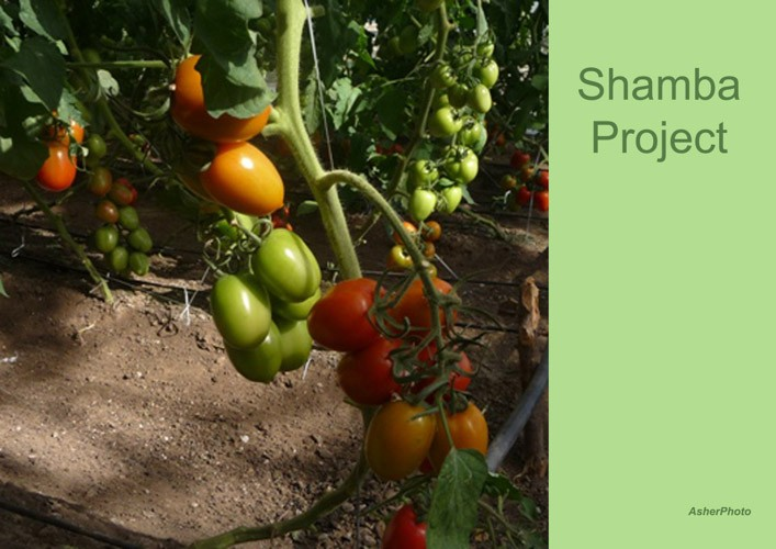 01-ongoing-Shamba-project