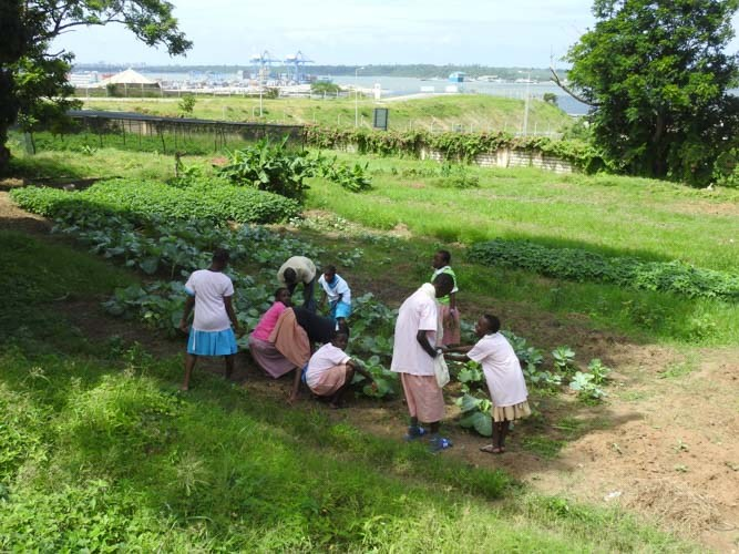 37-ongoing-Shamba-education-project