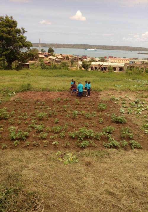 40-ongoing-Shamba-education-project