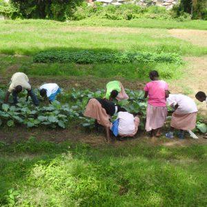 les enfants entretiennent le potager